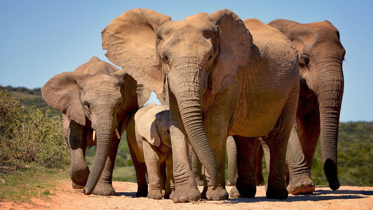 4_voyage-parc-elephant-addo.jpg
