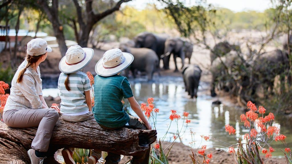 Safari Afrique du Sud en famille