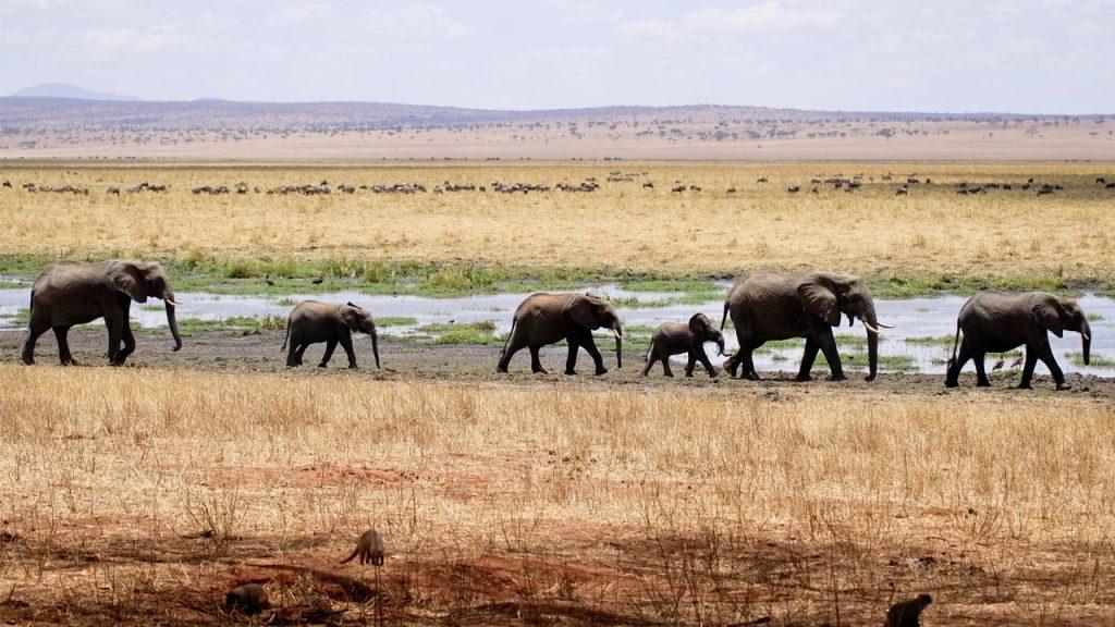 Circuit Tanzanie elephant
