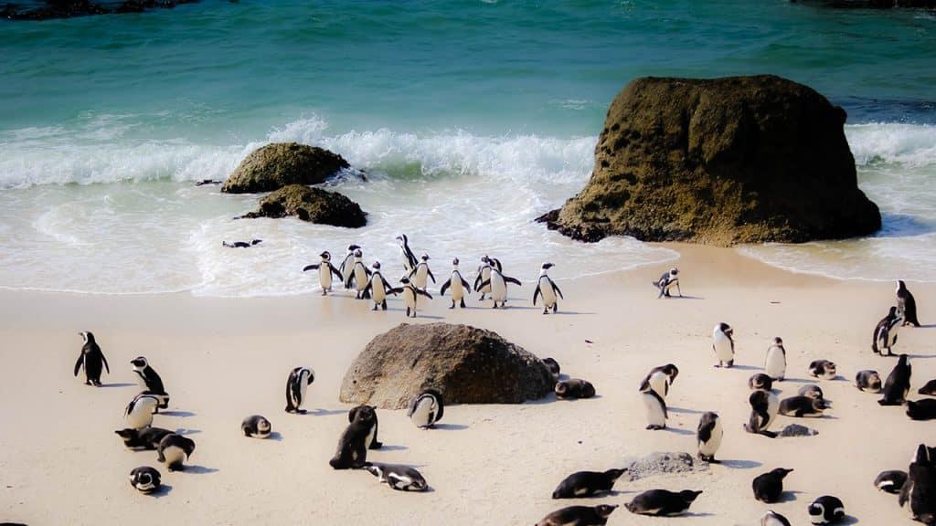 Circuit boulders beach afrique du sud