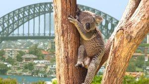 Voyage Australie famille