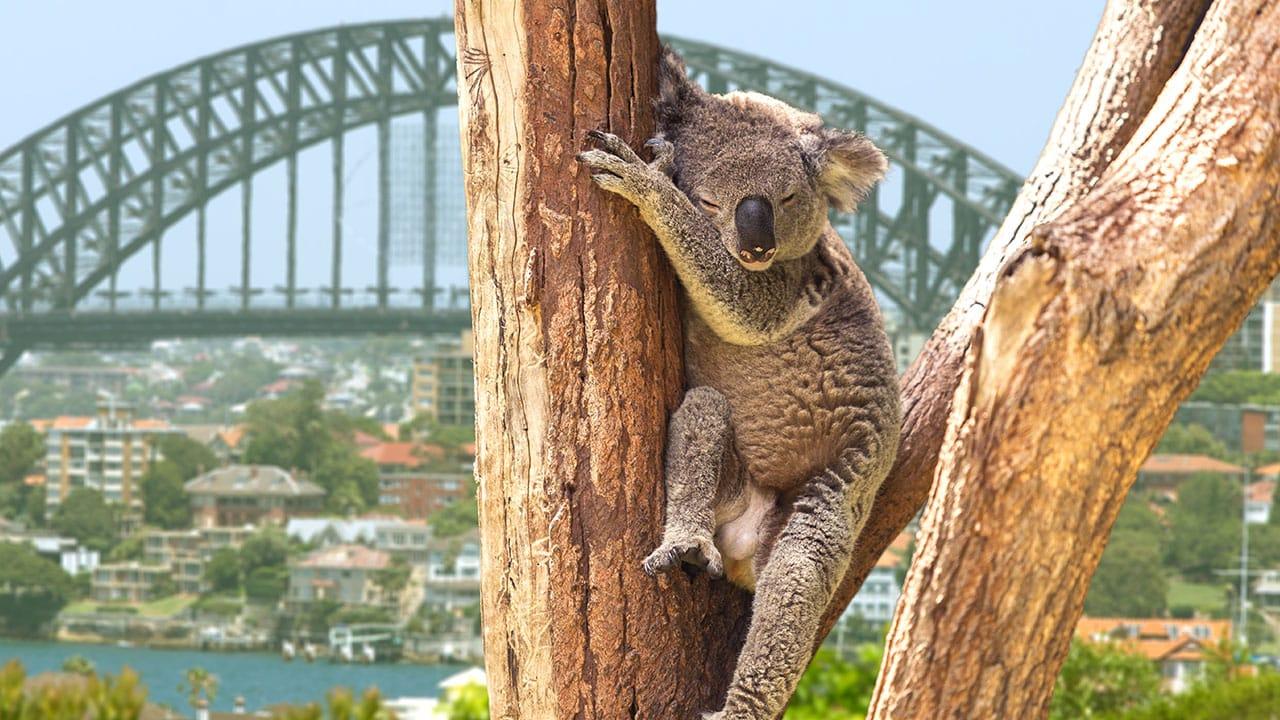 voyage-australie-famille-1.jpg