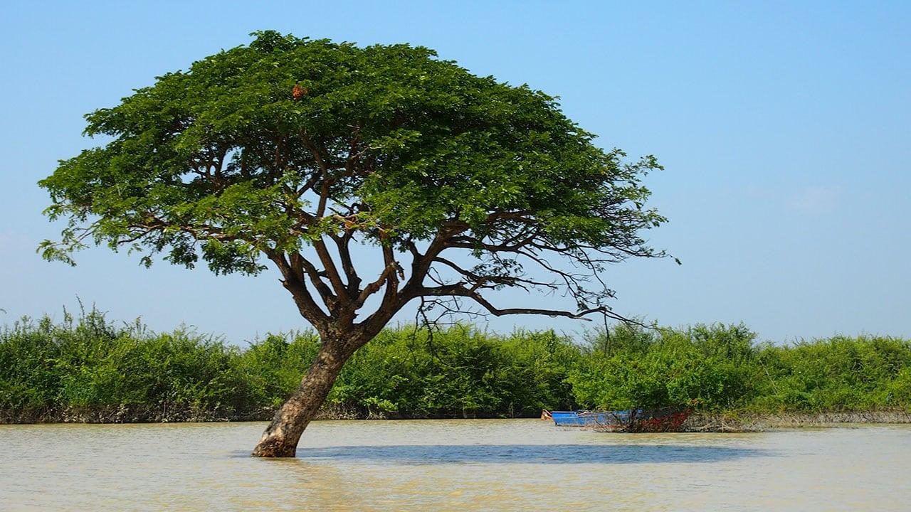 voyage-cambodge-lac-tonle-sap-3.jpg