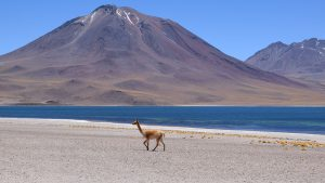 Voyage Miscanti lac Chili