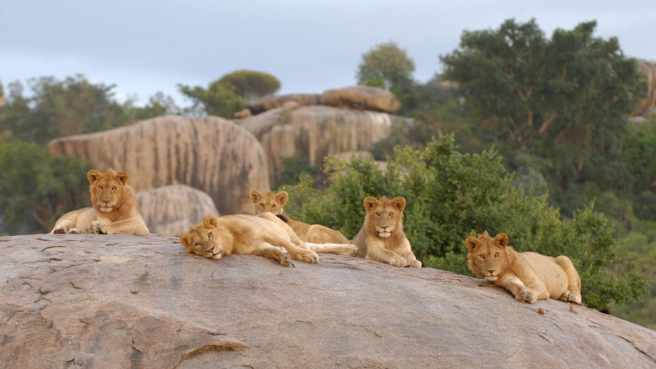 voyage-tanzanie-enfant-lion-2.jpg