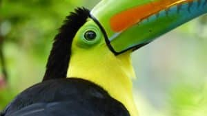 Voyage Costa Rica observation toucan