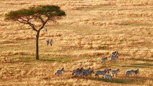 Voyage Tanzanie famille zèbres