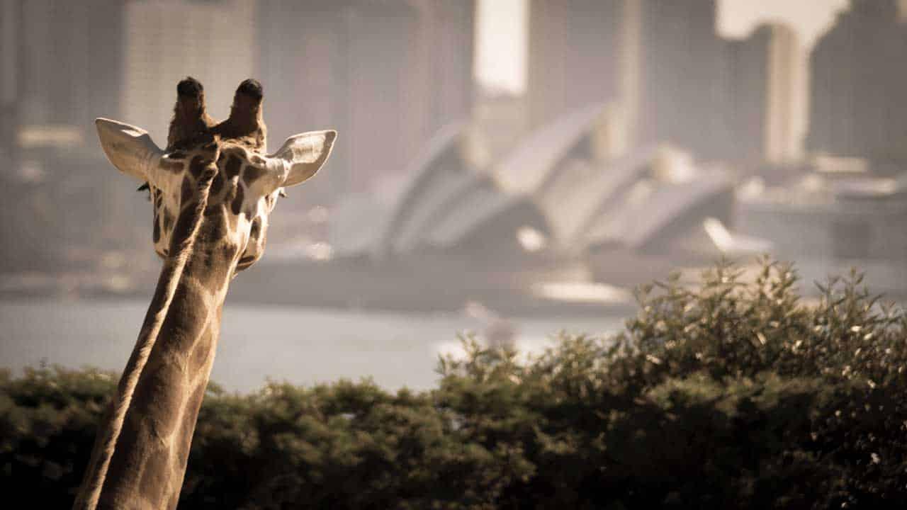 Nuit insolite au coeur de Sydney