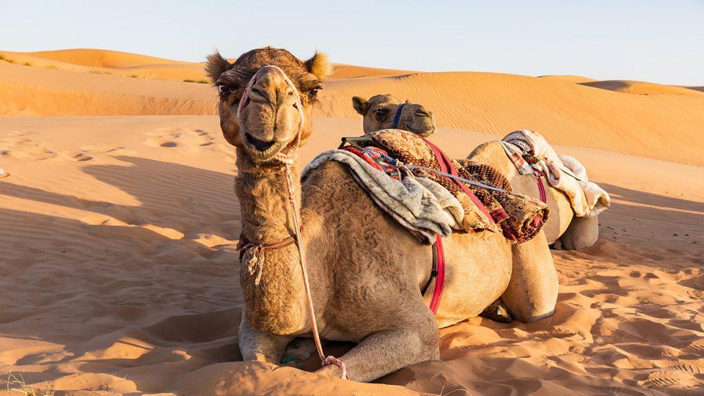 Circuit Oman en famille