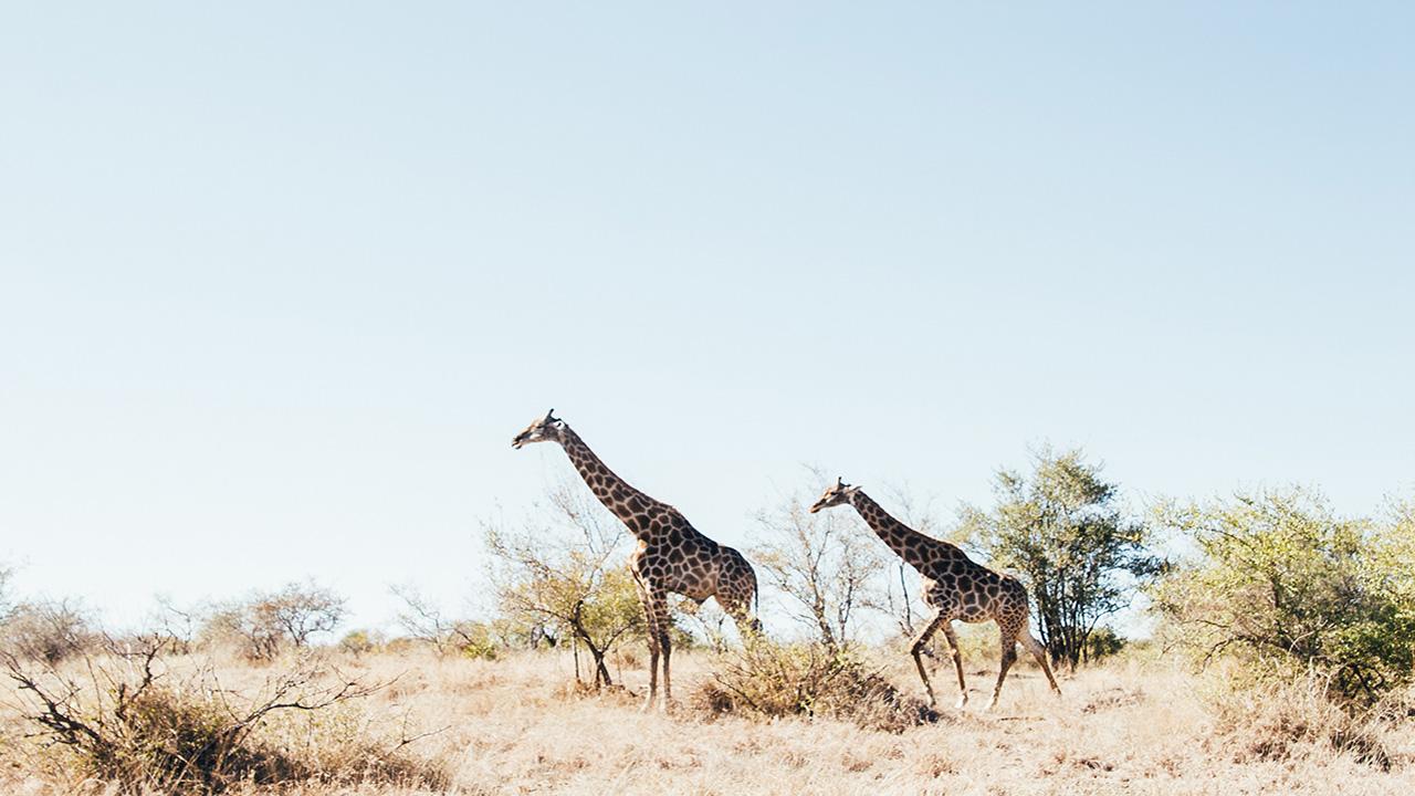 Voyage Afrique du Sud en famille